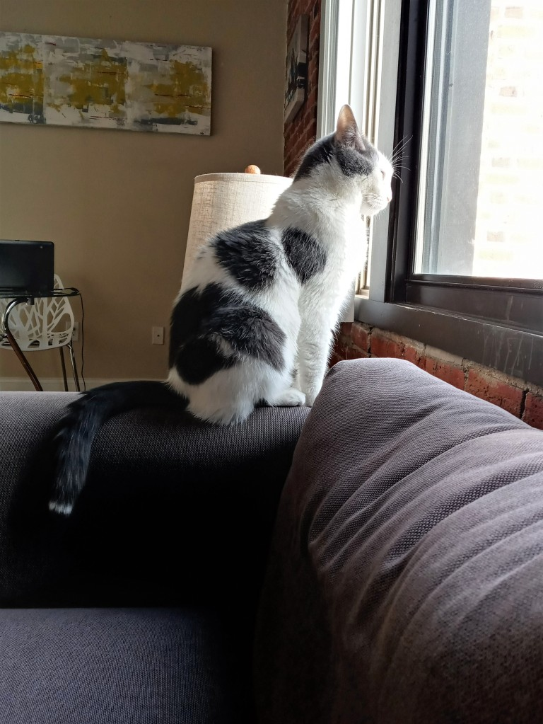 A bicolor cat sits on a grey sofa, looking out the window